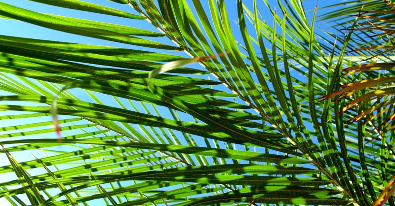 Happy Palm Sunday Messages, Quotes and Wishes 2021 with Images Pictures Photos HD Wallpapers Free Download 17
